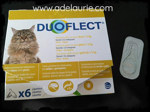 duoflect : un antipuce efficace pour votre korat