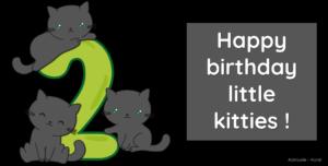 Les chatons korat ont presque 2 mois – vidéos