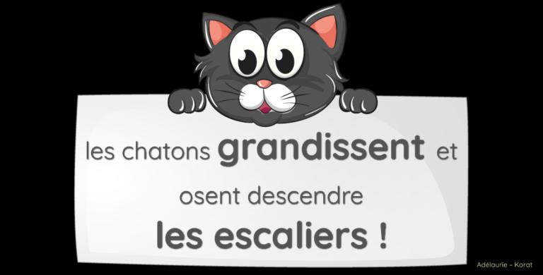 les chatons korat découvrent le rez-de-chaussée – vidéos