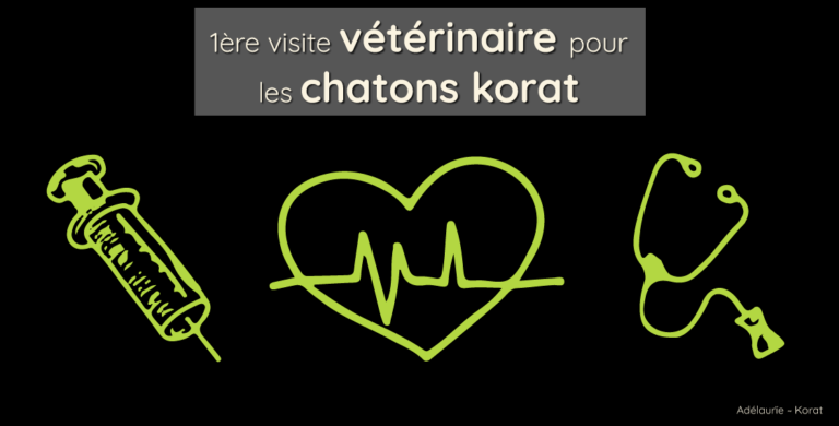 Les chatons korat ont eu leur 1ère visite vétérinaire