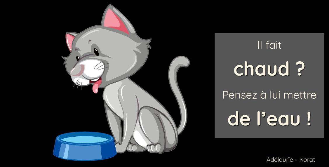 Canicule : pensez à l'eau fraîche pour votre chat