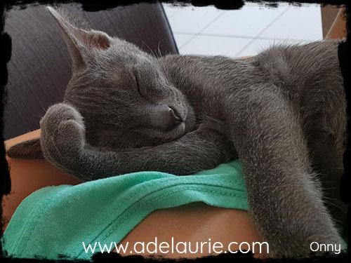 chaton korat d'adelaurie qui dort