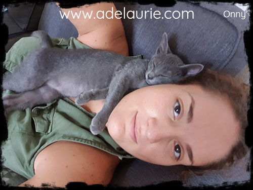 chaton korat d'adelaurie calin sur sa maman