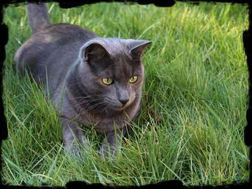 purger son chat et lui donner de l'herbe à chat est important pour éviter les boules de poils
