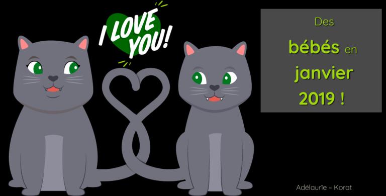 Des chatons korat vont naître début janvier 2019 !